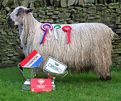 One of our Teeswater hoggs takes top prize at the Great Yorkshire Show 2007